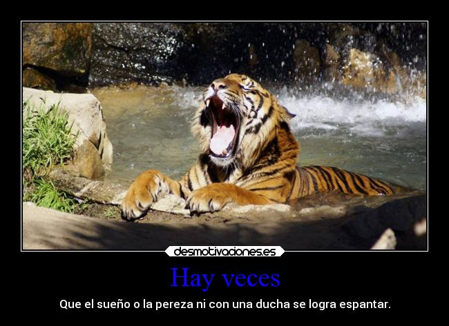 im genes y carteles de tigre pag 8 desmotivaciones. Black Bedroom Furniture Sets. Home Design Ideas