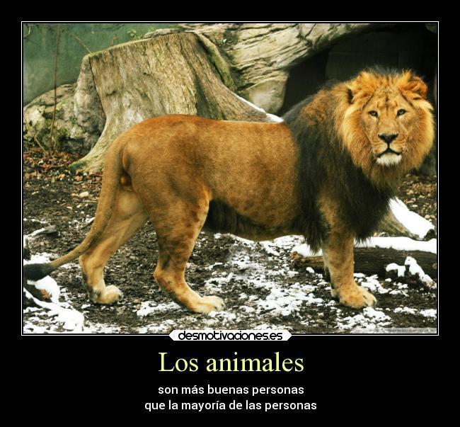 Los Animales Desmotivaciones