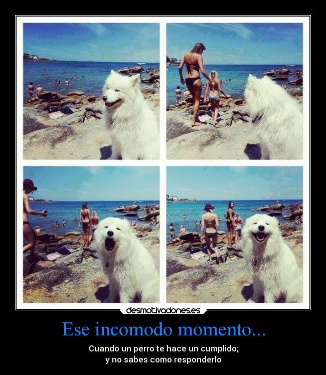 carteles animales perro chicas playa sol arena cumplidos bikinis desmotivaciones