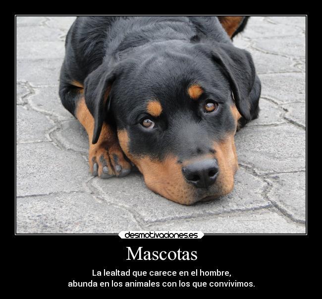 Mascotas Desmotivaciones