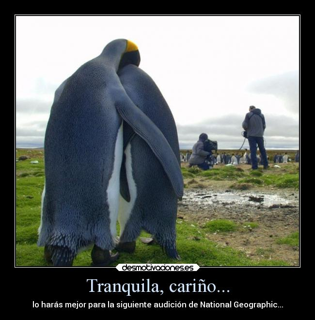 carteles chiste animales national geographic audicion pereshosho desmotivaciones