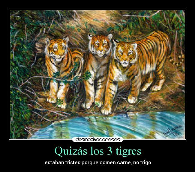 Quizás Los 3 Tigres Desmotivaciones