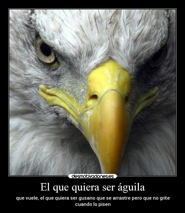 El Que Quiera Ser águila Desmotivaciones