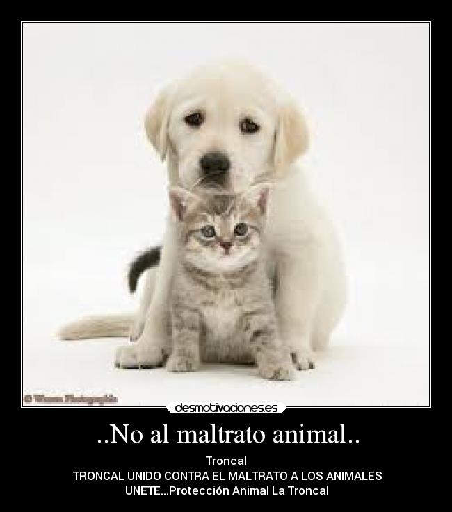 No Al Maltrato Animal Desmotivaciones