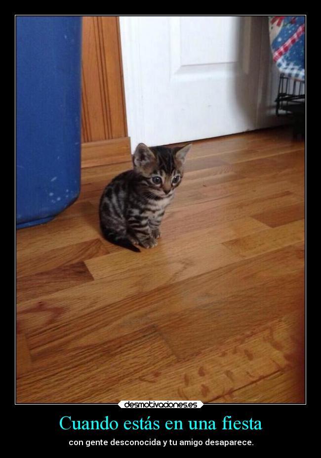 carteles fiesta amigos pobreshito gatito cartelmierda desmotivaciones