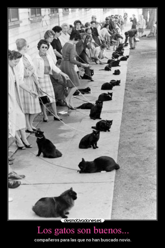 carteles gatos humor ayuda solteras desmotivaciones