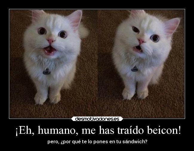 carteles humor fail animales amor abrazos gatos hook desmotivaciones