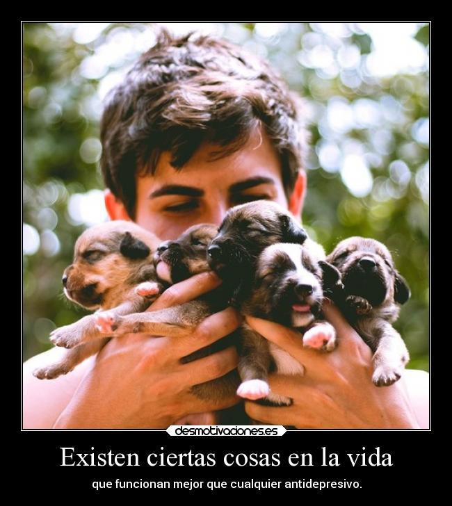 carteles vida animales perro antidepresivo tristura13 desmotivaciones