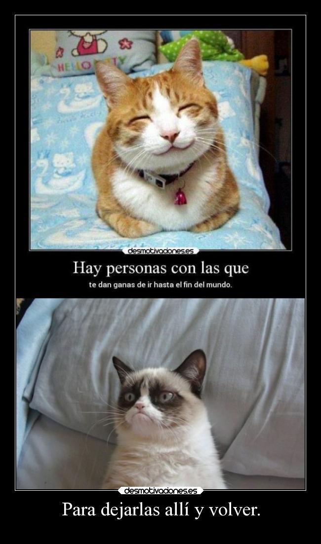 carteles gatos animales humor grumpy cat desmotivaciones