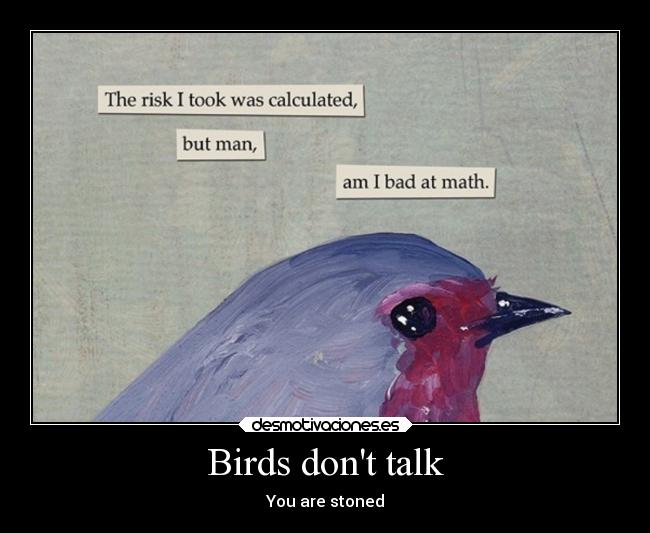 Birds dont talk - You are stoned