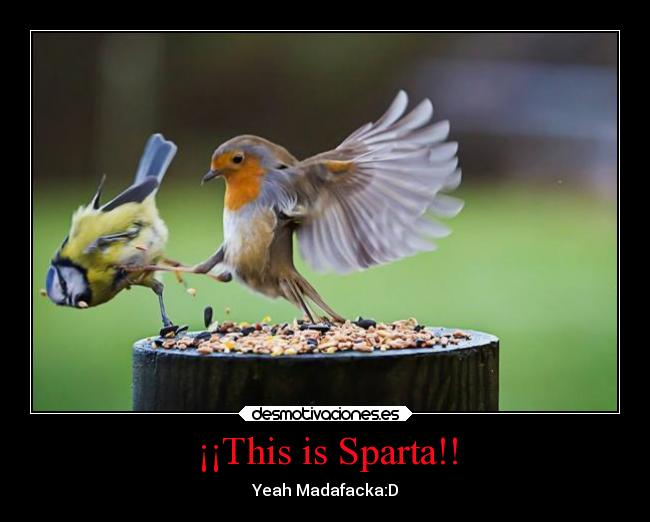 ¡¡This is Sparta!! - Yeah Madafacka:D