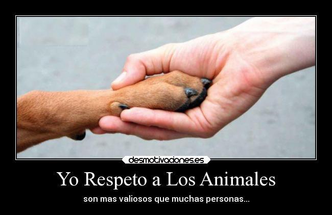 Resultado de imagen para respeto a los animales