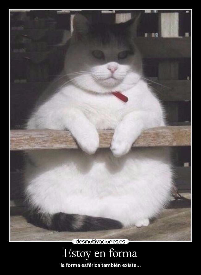 El gato gordo - 3 part 1