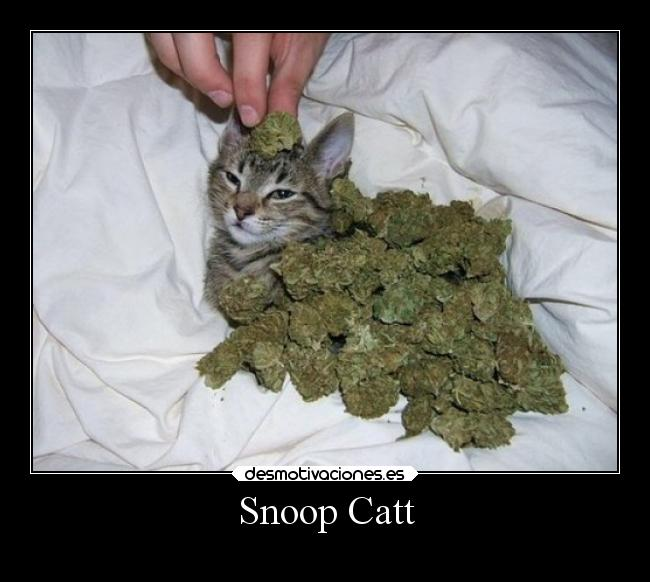 Snoop Catt -
