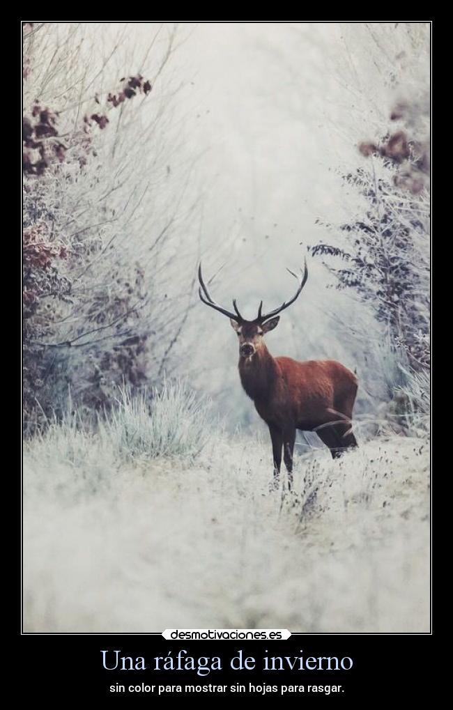 Una ráfaga de invierno | Desmotivaciones