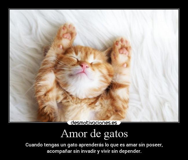 Amor De Gatos Desmotivaciones