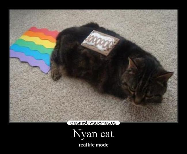 Nyan cat - real life mode