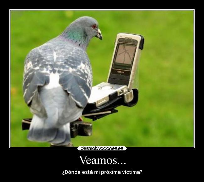 Resultado de imagen de paloma cagadora