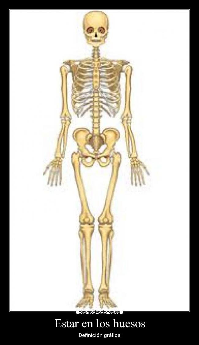 Excepcional Gráfica De Un Esqueleto Adorno - Anatomía de Las ...