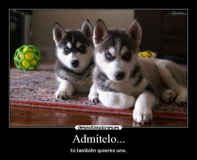 Husky Frases: Admítelo...