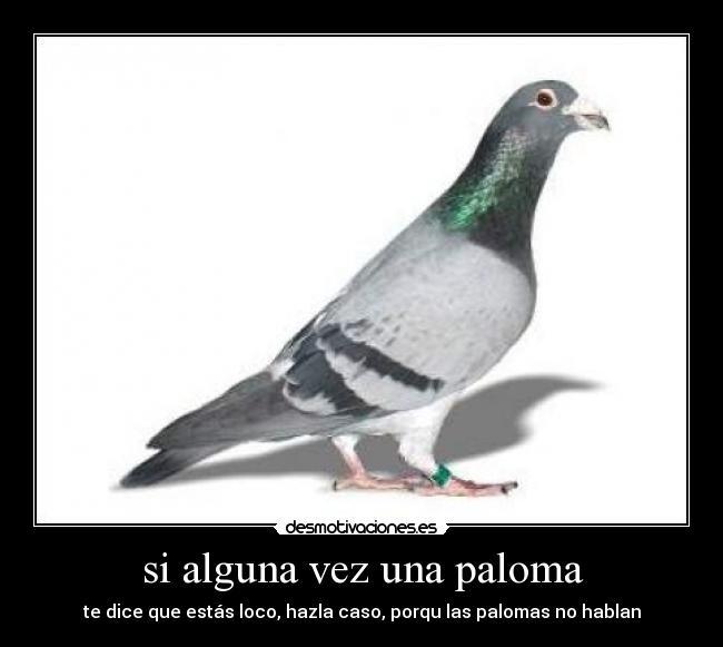 https://img.desmotivaciones.es/201104/palomasmensajeras_vip.jpg