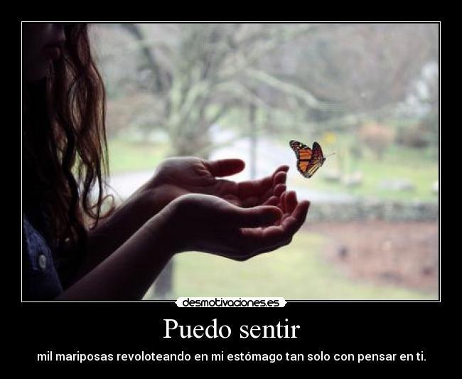 Frasesamor Imagenes De Mariposas De Amor Con Frases