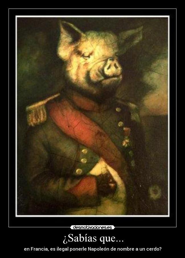 carteles napoleon francia sabias que nombre leyes ilegal ley absurdo fap  walt k francia francia cerdo desmotivaciones 73830aeaa75