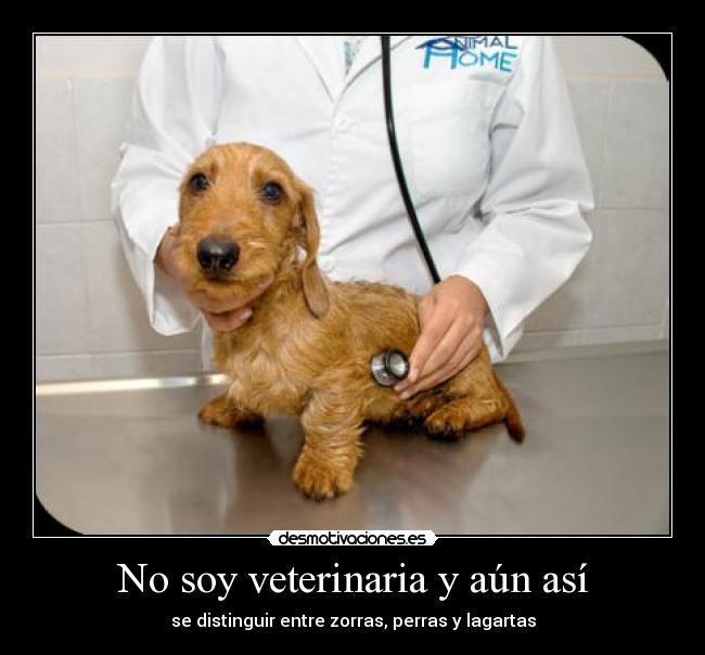 No Soy Veterinaria Y Aún Así Desmotivaciones