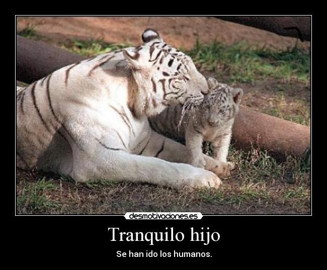 Imagenes Y Carteles De Tigres Pag 2 Desmotivaciones