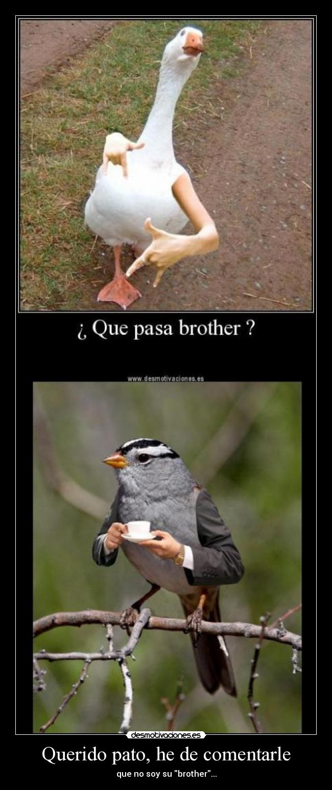 carteles pajaro like sir walt_k anonymous desmotivaciones