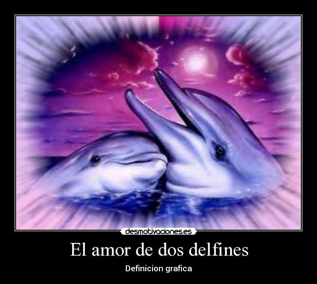 El Amor De Dos Delfines Desmotivaciones