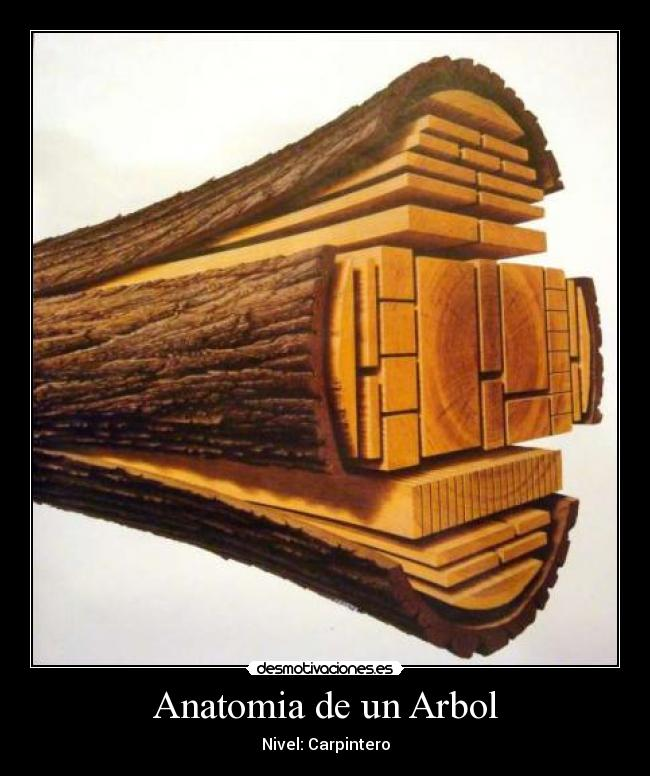 Anatomia de un Arbol | Desmotivaciones