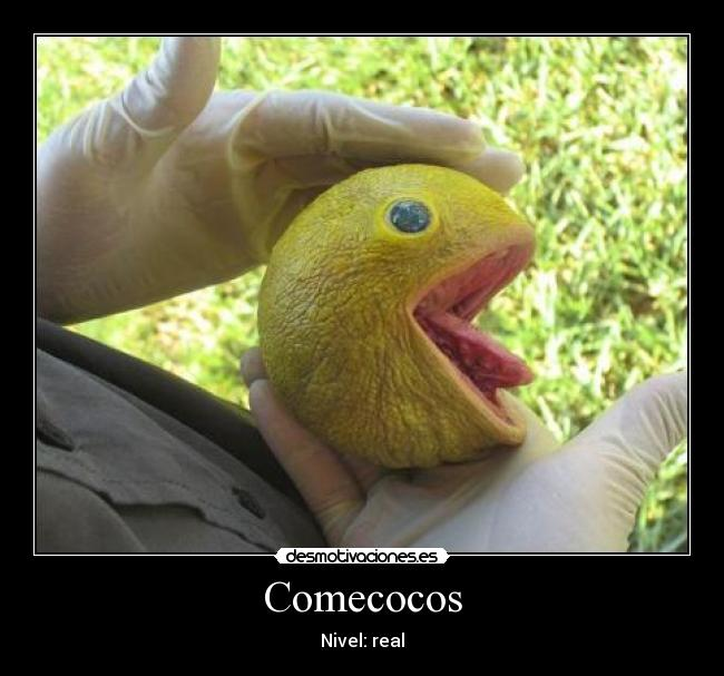 Comecocos - Nivel: real