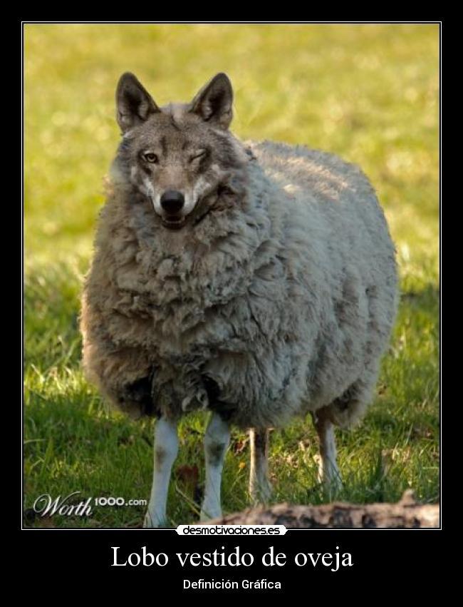 Lobo Vestido De Oveja Desmotivaciones