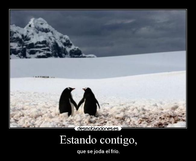 carteles pukin penguins their rainbow palace cartel muy visto know desmotivaciones