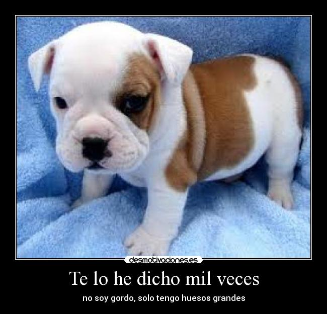 Imagenes Y Carteles De Cachorros Pag 6 Desmotivaciones
