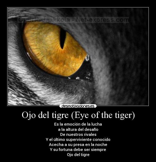 Imágenes y Carteles de TIGER Pag. 29 | Desmotivaciones