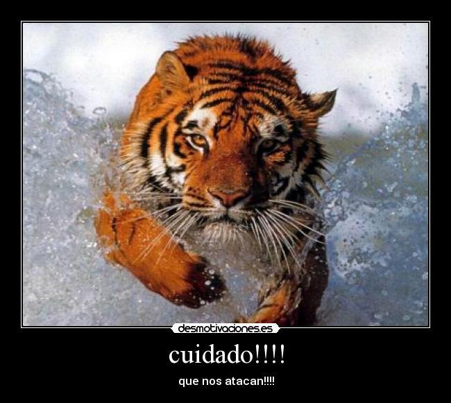Imágenes Y Carteles De Tigres Pag 21 Desmotivaciones