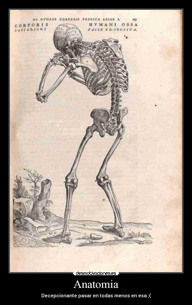Anatomia | Desmotivaciones