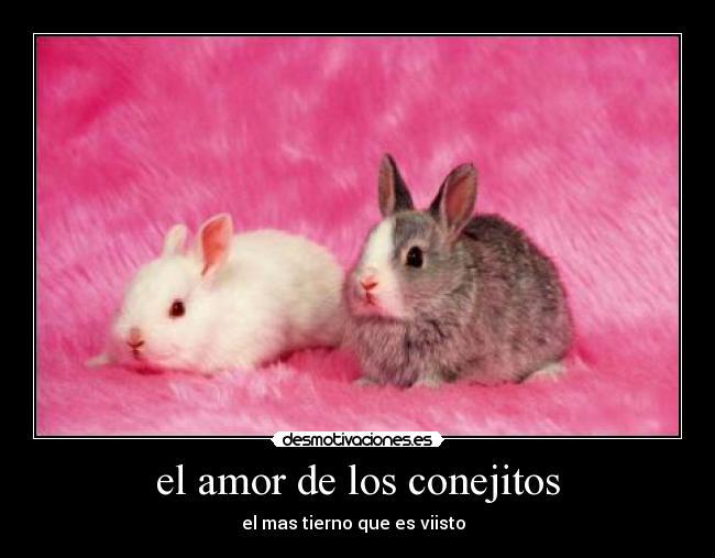 Imagenes De Conejos Tiernos Con Frases Www Imagenesmy Com