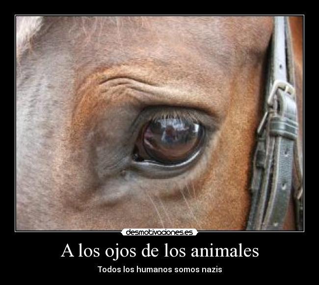 A Los Ojos De Los Animales Desmotivaciones