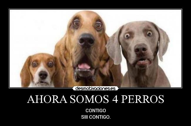 Ahora Somos 4 Perros Desmotivaciones