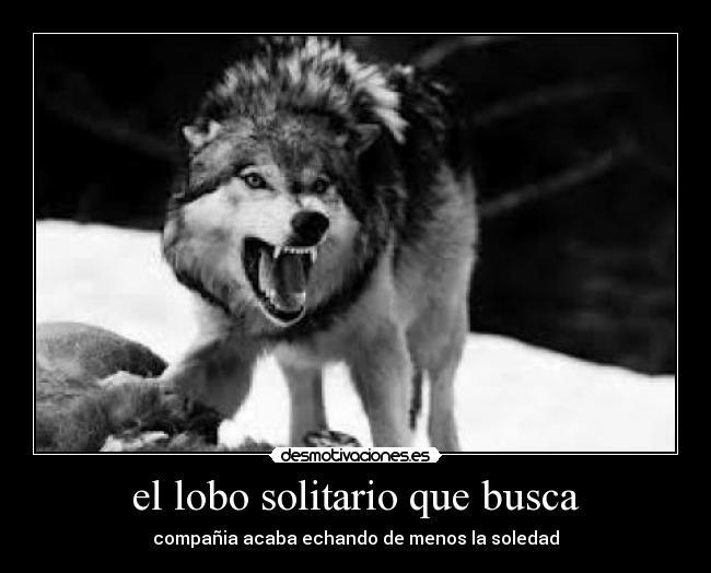 El Lobo Solitario Que Busca Desmotivaciones