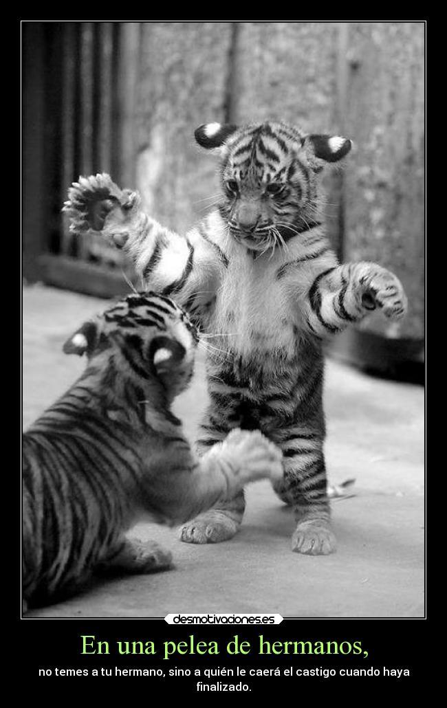 Imágenes Y Carteles De Tigres Pag 5 Desmotivaciones