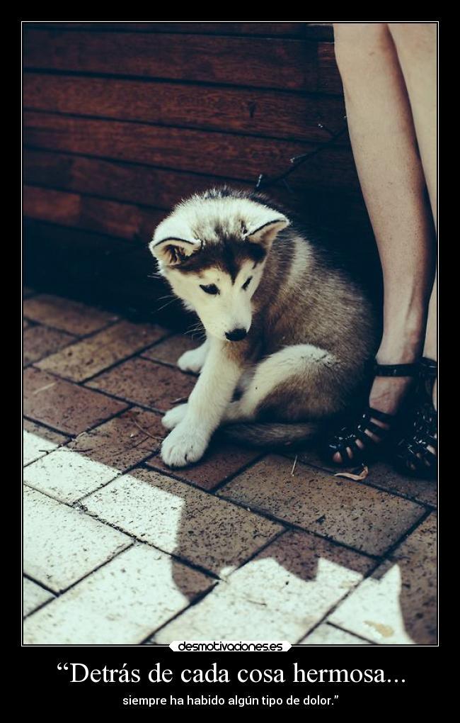 Imagenes Y Carteles De Cachorro Desmotivaciones