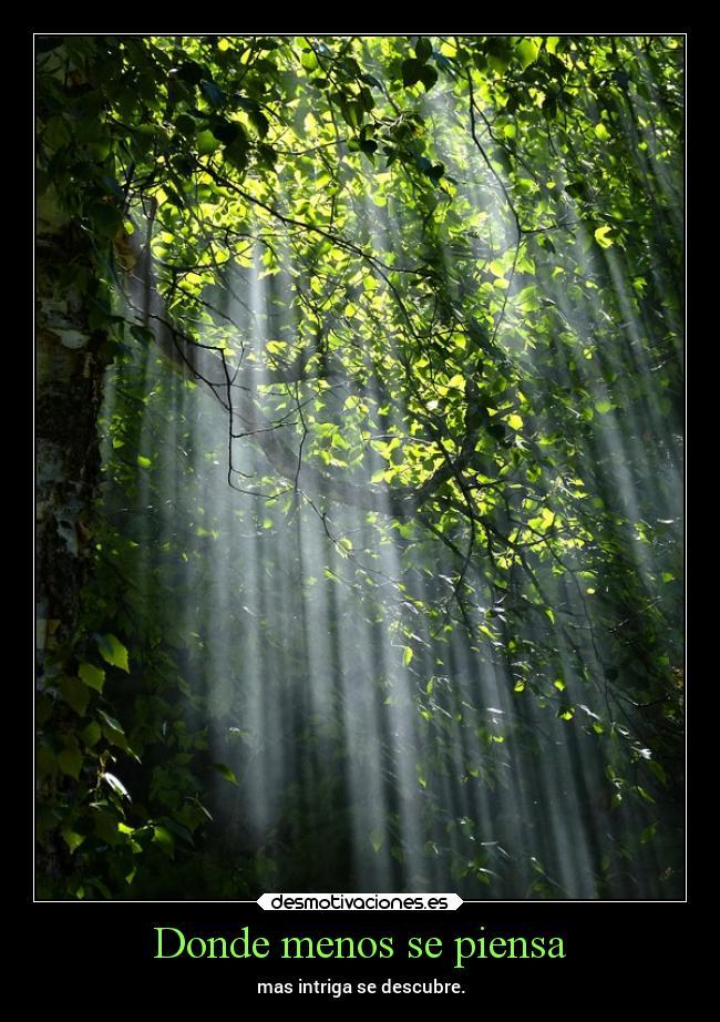 Imágenes Y Carteles De Bosque Pag 12 Desmotivaciones